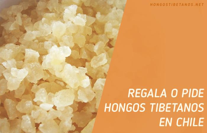 Hongos del Tíbet en Chile