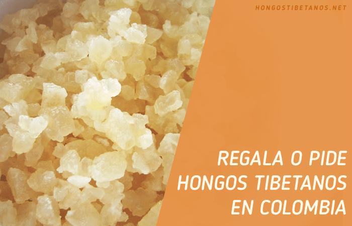 Regala y Pide Hongos Tibetanos en Colombia